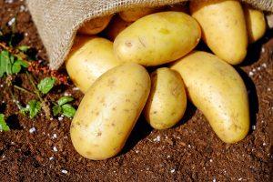 close-up-food-harvest-144248