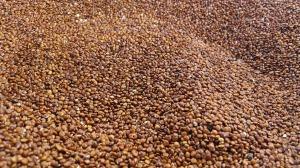 quinoa-2337621_1920
